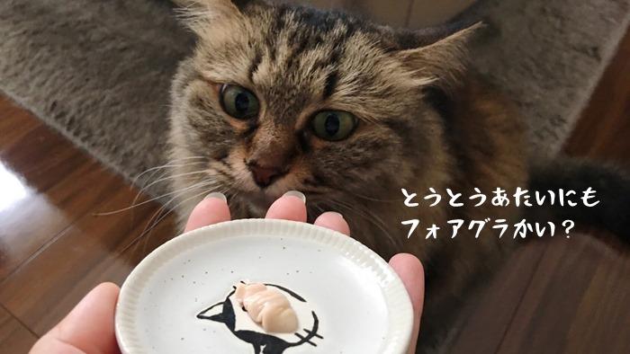 モグリッチを試食する猫