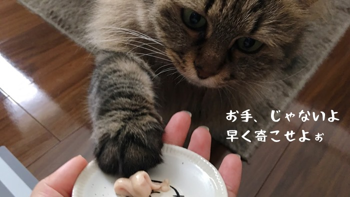 モグリッチを催促する猫