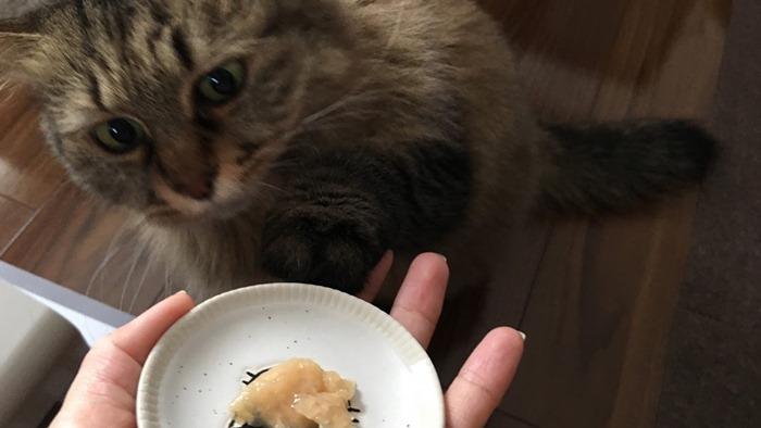 ナチュラルキッスを催促する猫