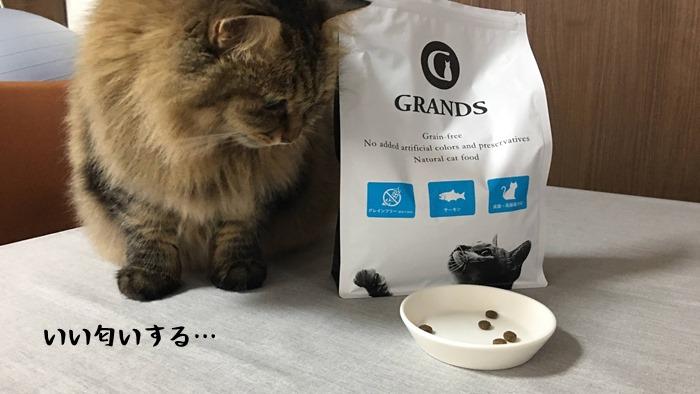 グランツキャットフードに興味がある猫