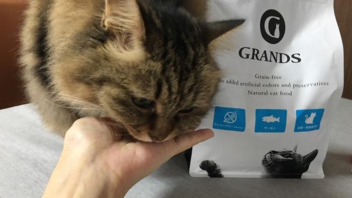 グランツサーモンを試食する猫