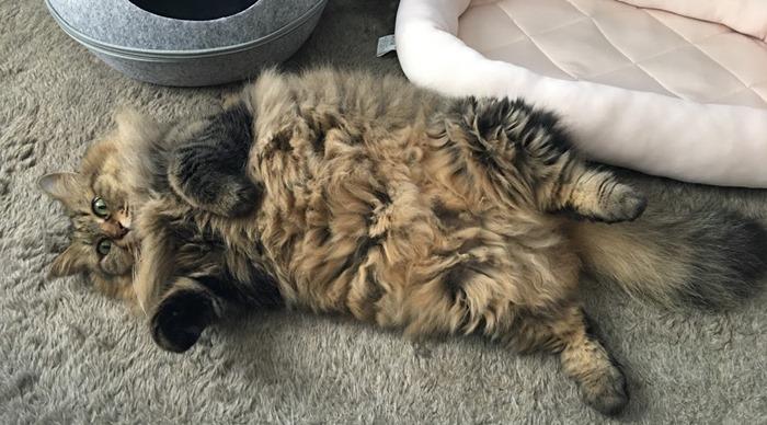 太り気味な猫