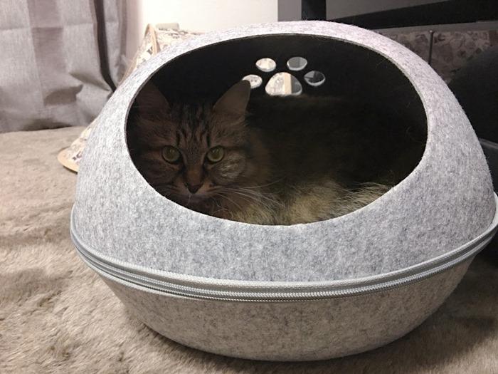 ドーム型キャットハウス(猫用ベッド)に入った猫
