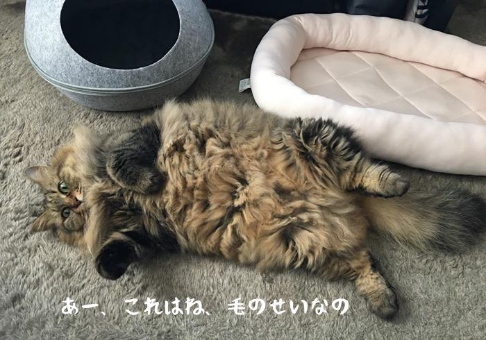 猫と猫用ベッドとキャットハウス
