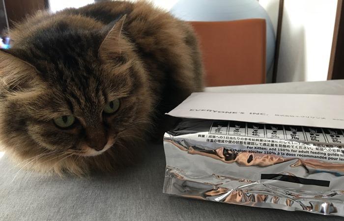 ファインキャットフードが気になる猫