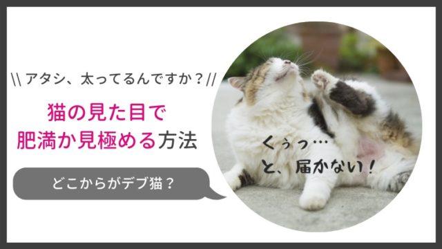 猫の肥満を見た目で判断する方法