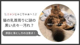 猫の乳首周りに黒い点々。原因と落とし方の注意点を解説します