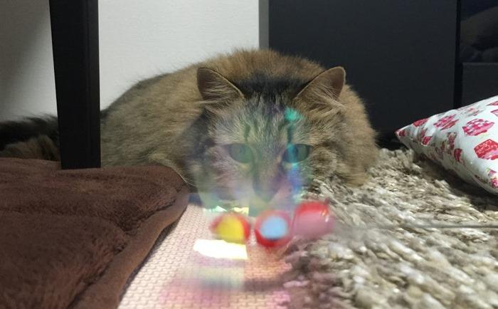 猫を遊ばせるコツ