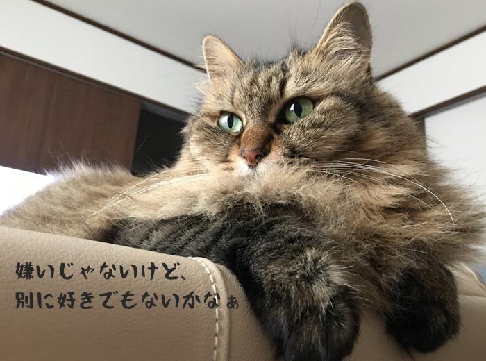 キャットフードの感想を述べる猫
