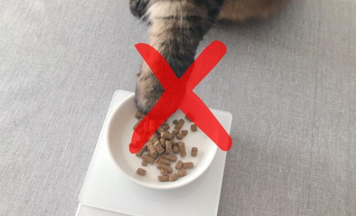 猫のダイエット「遊ぶ前の食事はNG」