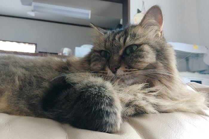 何かを思う猫