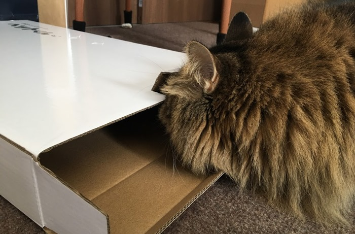箱を覗く猫