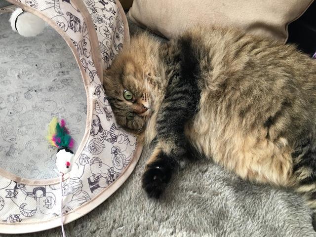 ねずみのおもちゃで遊ぶ猫