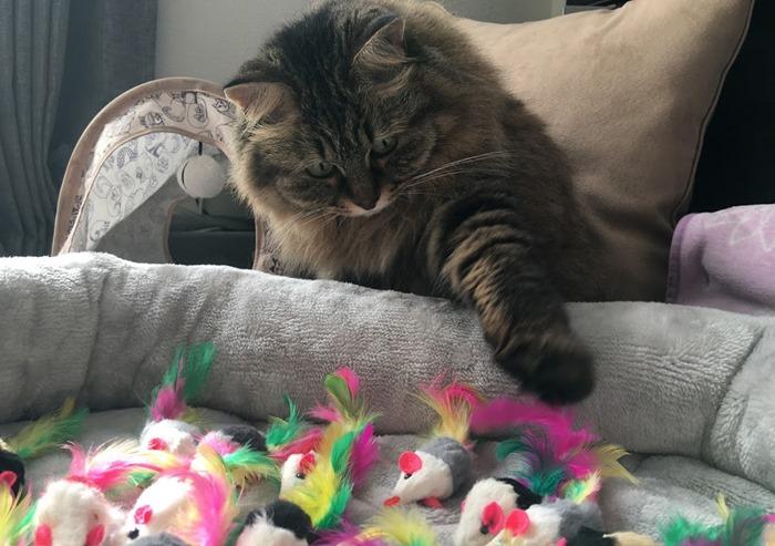 猫に遊んでもらうコツ「色の選び方」