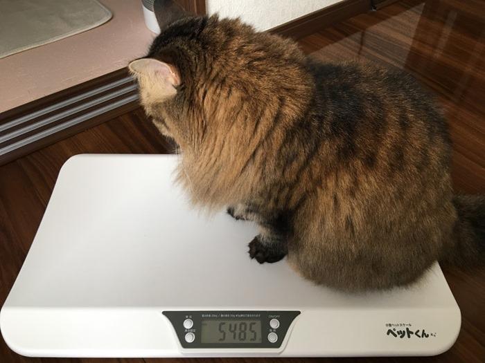 猫の体重測定