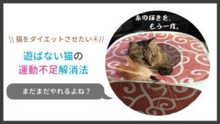 遊ばない猫の運動不足解消法