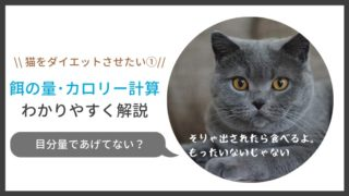 ダイエットさせたい猫の餌の量とカロリー計算方法