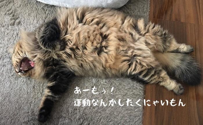 太り気味の猫
