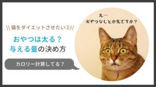猫のダイエット、おやつは太る?与える量は?