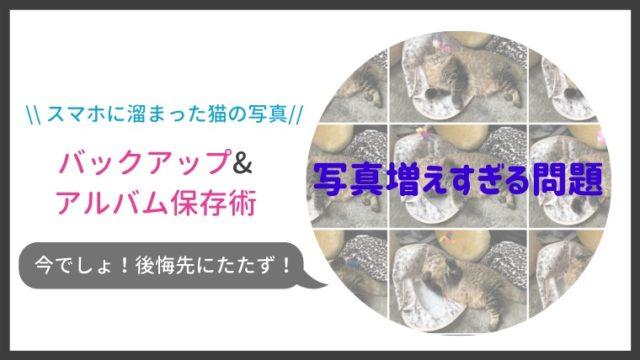 スマホに溜まった猫の写真をバックアップ&アルバム作成する方法