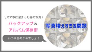 スマホに溜まる猫の写真のバックアップ&アルバム保存術