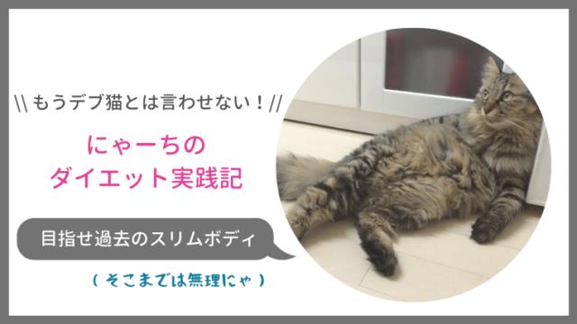 目指せ理想体重!デブ猫にゃーちのダイエット実践記